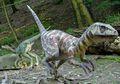 Velociraptor, Dinosaurus Pintar dan Cepat