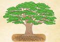 Ternyata Dahan Pohon Bisa Bergerak Sendiri, lo!