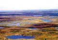 Mengenal Bioma Tundra, Daratan Tanpa Pohon