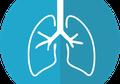 4 Fakta Seru Paru-paru Manusia, Organ Terbesar di Dalam Tubuh