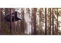 Hotel Ini Dibangun di Atas Pohon di Tengah Hutan, Intip, yuk!