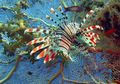 4 Hewan Laut Ini Memang Kecil, Namun Tak Kalah Berbahaya dari Hiu