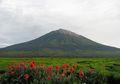 Gunung Tertinggi Apa saja yang Ada di Indonesia? Cari Tahu, Yuk!