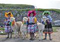Di Peru, Alpaca Dibuatkan Hari Nasional, Apa Keistimewaan Alpaca?