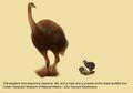 Burung Gajah, Sebutir Telurnya Cukup untuk 160 Orang