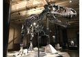 Suka Dinosaurus? Ayo Berkunjung ke Museum Dinosaurus