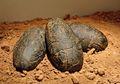 Ditemukan, Telur Dinosaurus Berumur 70 Juta Tahun