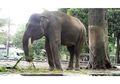 Fakta Seputar Gajah