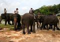Pusat Latihan Gajah Way Kambas