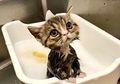 10 Foto Hewan Ini Menggemaskan Banget, Too Cute to be Real!