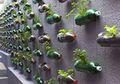 DIY: Bikin Taman Vertikal Yuk!