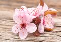 5 Produk Kecantikan Berbahan Dasar Bunga Sakura yang Bikin Kulit Cerah Bersinar