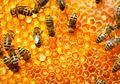 NASA Bakal Kirim Lebah ke Mars, Buat Apa Ya?