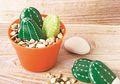 DIY: Kaktus Dari Batu Koral yang Mudah Dibuat