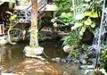 Ini Dia Cara Merawat dan Memelihara Taman Kolam yang Baik!