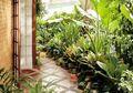 Taman Rumah: Yang Kecil Bisa Tetap Hijau dan Rimbun