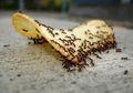 Tak Usah Panik, Semut Bisa Disingkirkan. Simak Tips Ini!