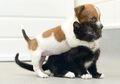 Pecinta Kucing lebih Pintar dari Pecinta Anjing