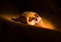Asmara Berujung Pisau, Saat Caci Maki Berakhir dengan Mutilasi