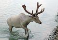 Trump Mulai Ngobok-obok Cagar Alam Nasional Kutub Utara Demi Minyak