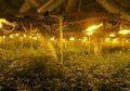 Pabrik Ganja Raksasa Tersembunyi di Balik Dinding Palsu dan Lift Rahasia Ditemukan di Inggris, Nilainya Mencapai Rp13 Miliar