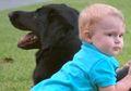 Bayi Ini Selamat dari 'Babysitter' yang Sering Bersikap Kasar Kepadanya Berkat Seekor Anjing