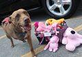 Mengharukan, Inilah 7 Kisah Heroik para Anjing yang Membuat Hati Kita Tergugah