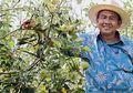 Edy Antoro, Berhasil Garap Kebun Apel dari Lahan Tandus