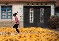 Mengapa Jagung Menjadi Hasil Panen Terbesar di Tiongkok?