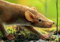 Penemuan Fosil di Spanyol Ungkap Evolusi Rambut Mamalia