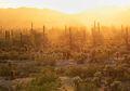 Hampir 30 Persen Spesies Kaktus Berada di Ambang Kepunahan