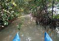 Mencegah Kerusakan Mangrove dan Wilayah Pesisir di Lampung