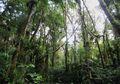Pohon Misterius Ekuador yang Bisa Berjalan