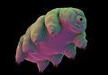 Beku Selama 30 Tahun, Makhluk Ini Hidup Kembali