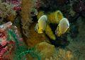 Laut Lestari Wakatobi