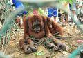 Kejahatan Satwa Dilindungi Kian Marak, Polisi Hutan Harus Ditambah