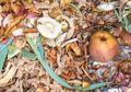 Ubah Sampah Jadi Listrik, Siswa 18 Tahun Menangi Lomba Sains Internasional