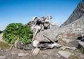 Misteri Danau Berisi Ratusan Kerangka Manusia di India akhirnya Terpecahkan