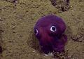 Mata Besar Hewan Ini Menghibur Ilmuwan dalam Penelitian