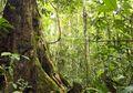 Fungsi Konservasi Lindungi Hutan Adat Masyarakat Ammatoa Kajang