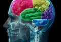 Terpapar Bahan Kimia dan Polusi Setiap Hari, Ini Bahayanya Bagi Otak