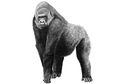 Beberapa Hal yang perlu Diketahui tentang Gorila yang Kabur di London