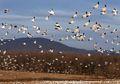 Kenaikan Suhu Global Sebabkan Burung Bermigrasi Lebih Awal