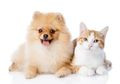 Garlic 2.0, Hasil Ilmuwan Cina Kloning Kucing Yang Sudah Mati