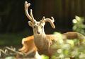 Mencemaskan, Rusa di Taman Nara Jepang Ditemukan Mati dengan 3,2 Kilogram Plastik di Perutnya