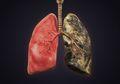 Video Ini Buktikan Bahaya Rokok yang Bisa Merusak Paru-paru Anda