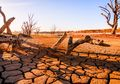 Lima Kepunahan Massal yang Pernah Dialami Bumi