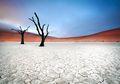'Skenario 2050', Prediksi Peneliti Tentang Kepunahan Manusia dalam 30 Tahun Mendatang