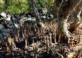 7 Fakta Penting Mangrove yang Harus Anda Ketahui