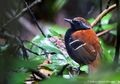 Akibat Polusi Suara, Burung Alami Stres Kronis